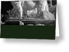 North American Wolf  Greeting Card