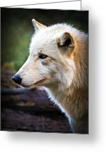 Grey Wolf Painting Greeting Card