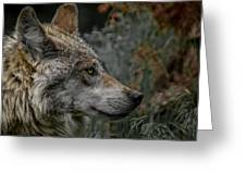 Grey Wolf Profile 3 Greeting Card