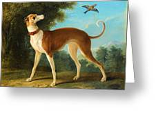 Greyhound In A Landscape Greeting Card