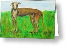 Greyhound Posing Greeting Card