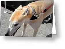 Greyhound Rrrescue 6 Greeting Card