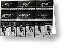 Greyhound Running Greeting Card