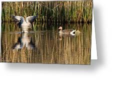 Greylag Goose Family Greeting Card