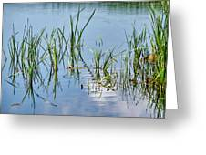 Greylake Reflections Greeting Card