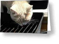 Grill Grate Gato Greeting Card