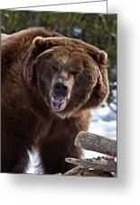 Grizzley Encounter Greeting Card
