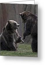 Grizzlies At Play Greeting Card