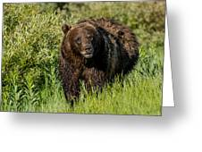 Grizzly 760 In The Morning Greeting Card