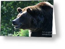 Grizzly-7755 Greeting Card
