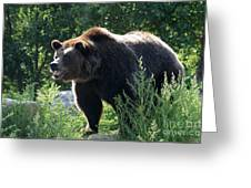 Grizzly-7756 Greeting Card