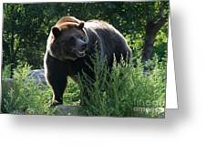 Grizzly-7759 Greeting Card