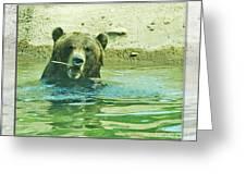 Grizzly Bath Greeting Card
