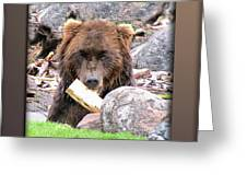 Grizzly Bear 01 Greeting Card