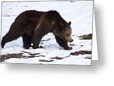 Grizzly Bear  #2463 Greeting Card