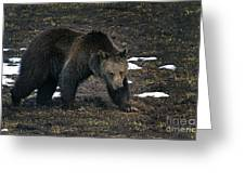 Grizzly Bear  #2510 Greeting Card