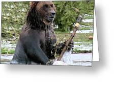 Grizzly Bear 6 Greeting Card