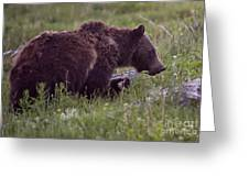 Grizzly Bear  #6192 Greeting Card