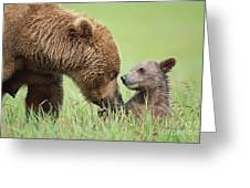 Grizzly Bear And Cub In Katmai Greeting Card