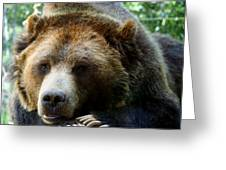 Grizzly Bear At Rest In Colorado Wildneress Greeting Card