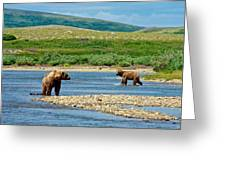 Grizzly Bear Communication In The Moraine River In Katmai  Np-ak Greeting Card