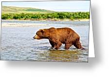 Grizzly Bear Determined To Catch A Salmon This Time In The Moraine River  Greeting Card