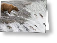Grizzly Bear Fishing For Sockeye Salmon Greeting Card