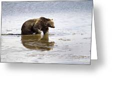 Grizzly Bear In Muddy Water Greeting Card by Mike Cavaroc