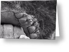 Grizzly Bear Paw Black And White Greeting Card