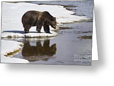 Grizzly Bear Reflected In Water Greeting Card