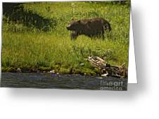 Grizzly Bear-signed-#1158 Greeting Card