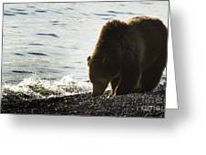Grizzly Bear-signed-#4137 Greeting Card