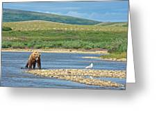 Grizzly Bear Stalking A Gull In The Moraine River In Katmai National Preserve-alaska Greeting Card