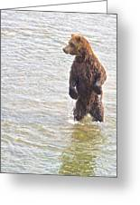 Grizzly Bear Standing To Get A Better Look In The Moraine River In Katmai Greeting Card