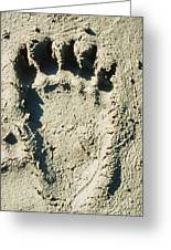 Grizzly Bear Track In Soft Mud. Greeting Card