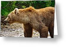 Grizzly Bear Very Close In Moraine River In Katmai National Preserve-ak Greeting Card