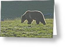 Grizzly Bear With Aura Greeting Card