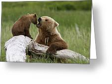 Grizzly Bear With Cub Playing Greeting Card