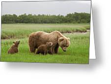 Grizzly Bear With Spring Cubs Greeting Card