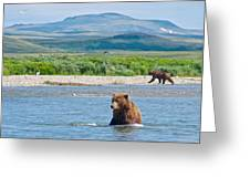 Grizzly Bears In Moraine River In Katmai National Preserve-ak Greeting Card