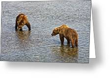 Grizzly Bears Looking For Salmon In Moraine River In Katmai Np-ak Greeting Card