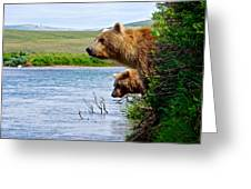 Grizzly Bears Peering Out Over Moraine River From Their Safe Island Greeting Card