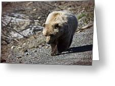 Grizzly By The Road Greeting Card