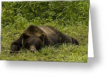 Grizzly Cub  #0863 Greeting Card