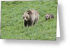 Grizzly Family On Dunraven Greeting Card