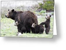 Grizzly Family Portrait Greeting Card