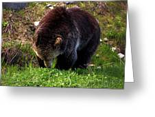 Grizzly Grazing Greeting Card