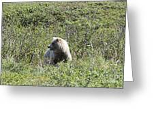 Grizzly One Greeting Card