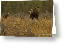 Grizzly Sow And Cub   #6365 Greeting Card