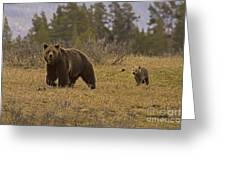 Grizzly Sow And Cub  #6382 Greeting Card